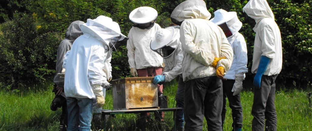 Atelier apiculture